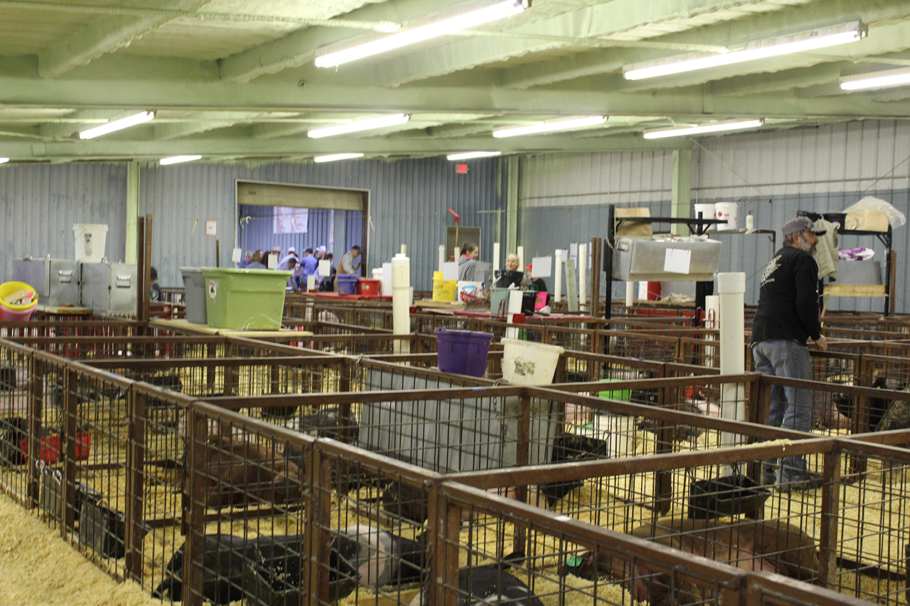 Stock Show (day 2) 1