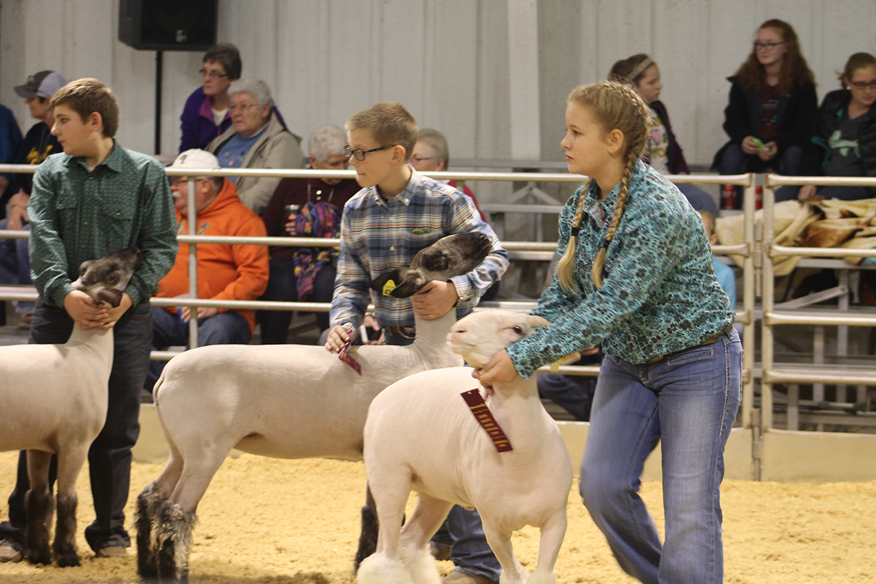 Stock Show (day 2) 2