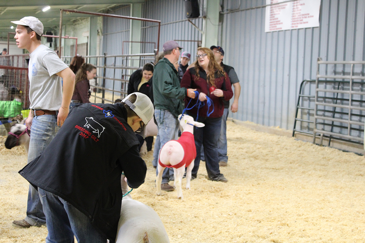 Stock Show (day 2) IMG_0737