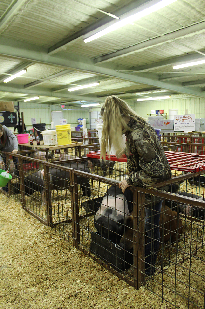 Stock Show (day 2) Juhl Sorrels tending to her pigs.