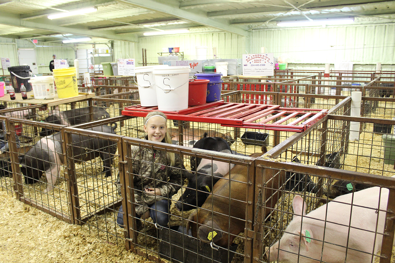 Stock Show (day 2) Juhl Sorrels with her and her sister_s pigs.