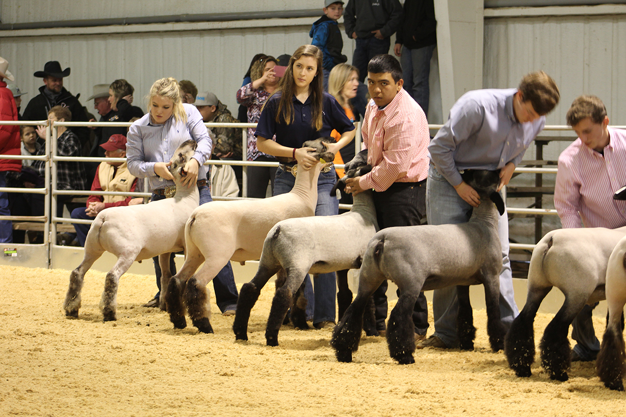 Stock Show (day 2) Senior Showmanship Competition