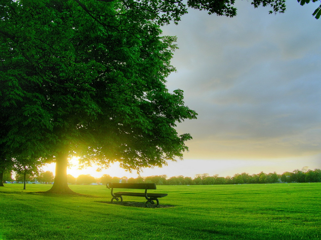 Green Nature Wallpaper – The Flash Today